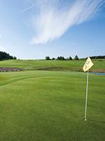 Bild Golf